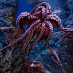 Octopus_The_Blue_Planet- (1)