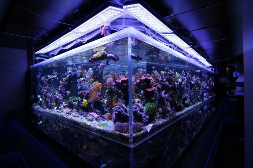 Peter-Canada-1350G-Fish-Tank1