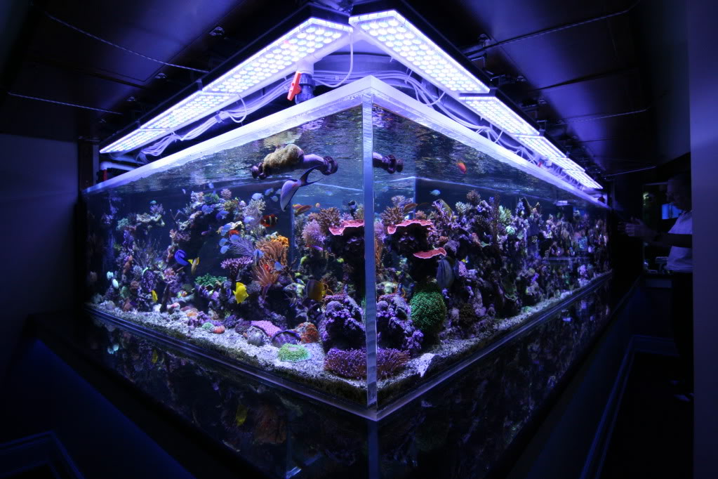 Reef Aquarium Led orphek pencahayaan