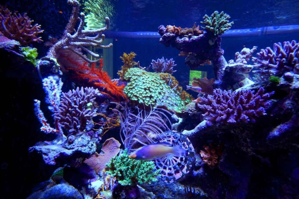 Reef-led-aquarium-light