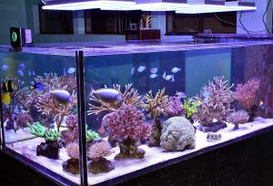 Aquarium LED Lighting Photos
