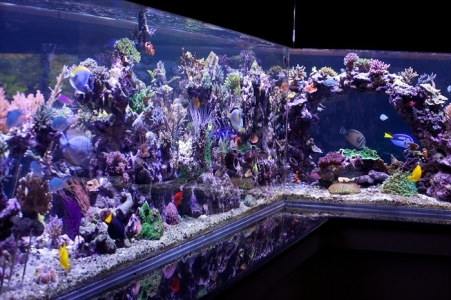amazing-reef-aquarium
