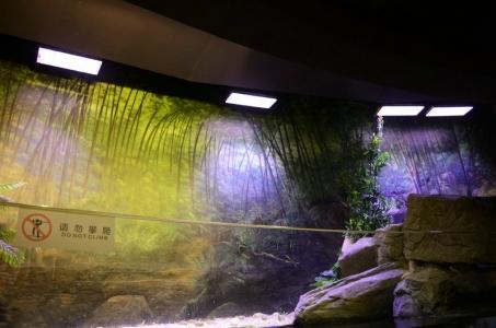 chengdu-public-aquarium-LED-lighting-china -zone-10