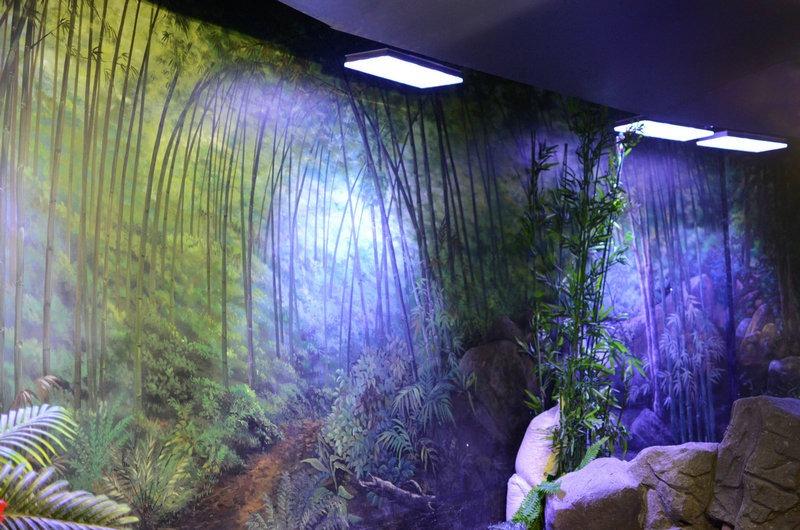 chengdu-public-aquarium-LED-lighting-china -zone-5