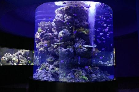 reef-cylinder-aquarium
