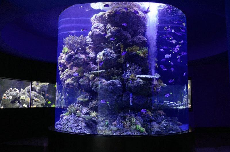 récif-cylindre-aquarium