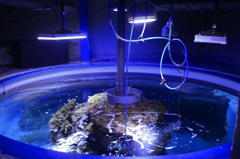 成都公共水族館LED照明熱帶-sea區,33