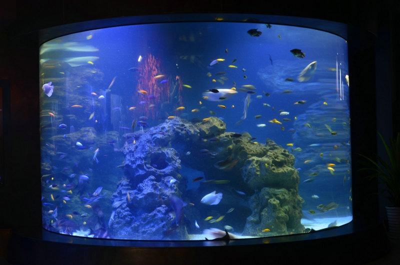 cylinder-reef-aquarium-orphek-led