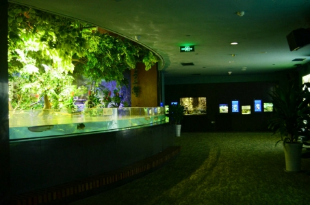 planted-aquarium-LED-lighting