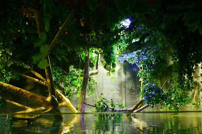 forest-planted-aquarium-LED-lighting
