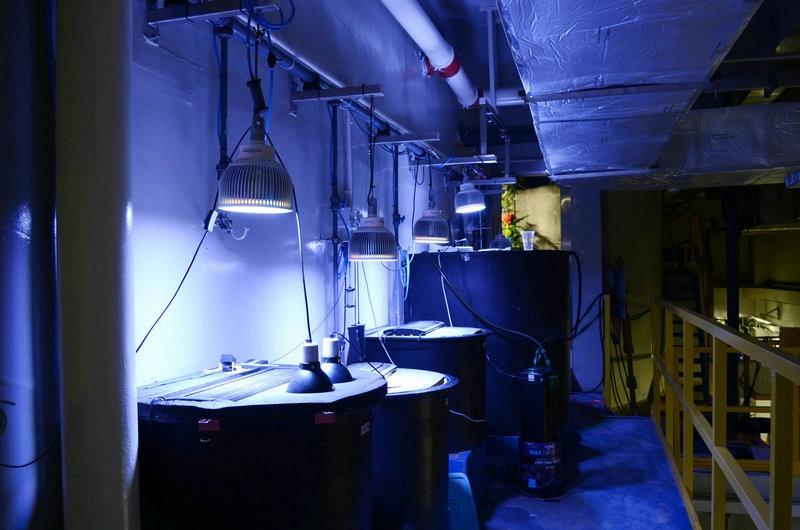 aquarium led lighting fotos orphek. Black Bedroom Furniture Sets. Home Design Ideas