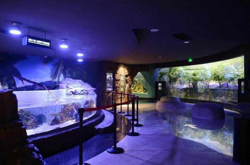 freshwater planted aquarium aquascaping (1)