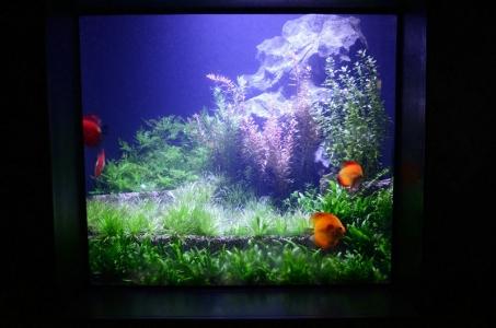 planted-discus-aquarium