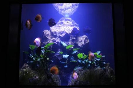 discus- aquarium aquascaping (4)