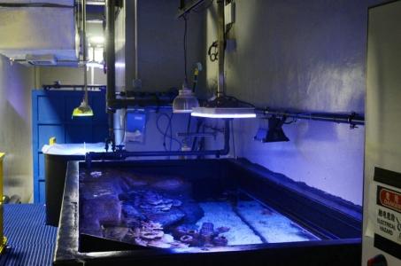 orphek-atlantik-led-public-aquarium