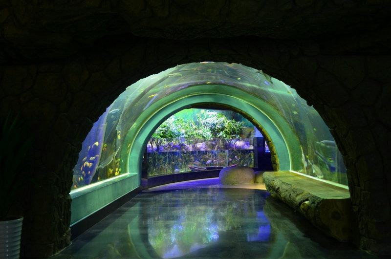 freshwater planted aquarium aquascaping (4)