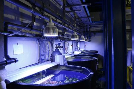 Orphek-LED-public-aquarium