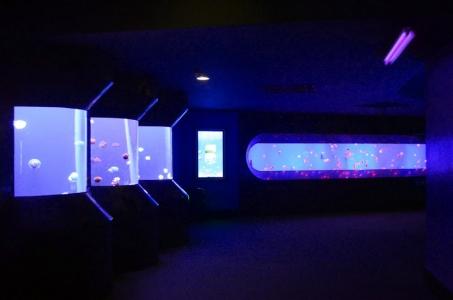 jellyfish-aquarium-LED-lighting (1)
