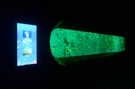 -jellyfish-aquarium-LED-lighting (2)