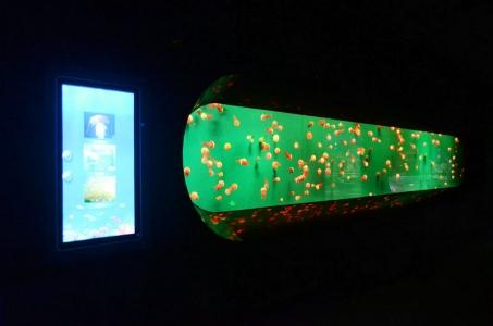 jellyfish-aquarium-LED-lighting (3)