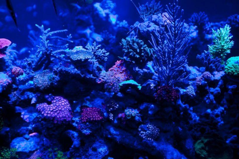 moonlight-reef-aquarium