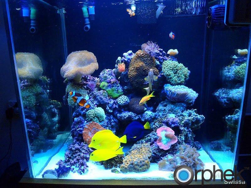 Aquarium led lighting photos orphek for Saltwater fish tank lights