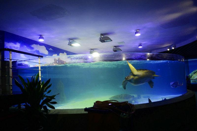 aquarium led verlichting foto orphek. Black Bedroom Furniture Sets. Home Design Ideas