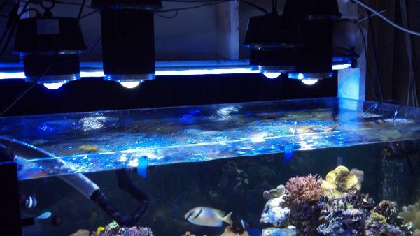 reef aquarium led light orphek dif 100 and dif 30