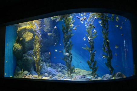 reef-marine-aquarium-LED-light