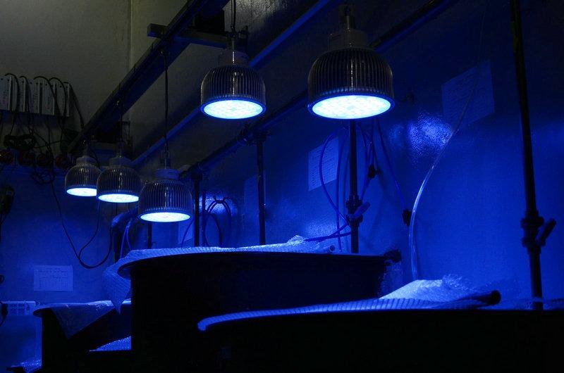 Aquarium clairage led photos orphek - Eclairage led aquarium ...