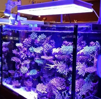 sps Aquarium led orphek