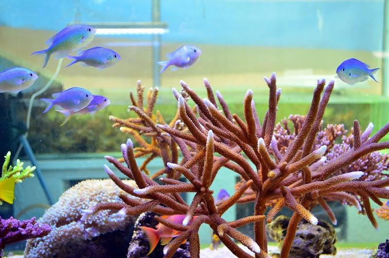 SPS礁水族館