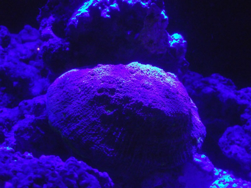 corals photos under led moonlight
