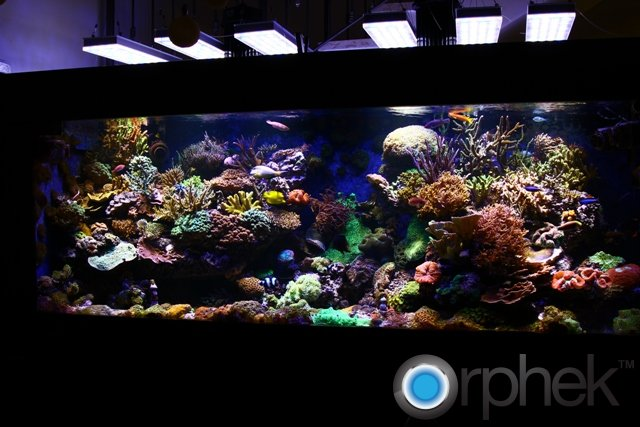 Orphek PR156 led-Aquarium