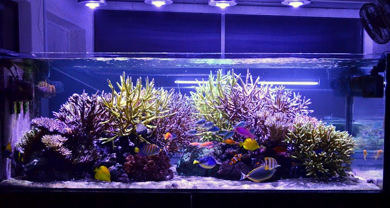 Reef Aquarium med Orphek LED Emitter