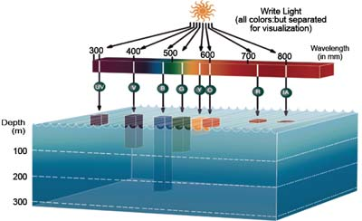 Light penetration in seawater at different wavelengths