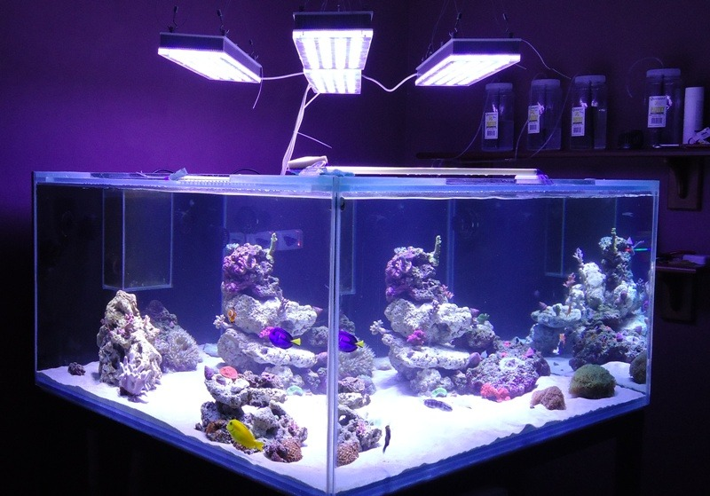 corals under orphek led light
