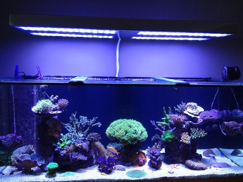 récif aquarium avec eclairage led orphek