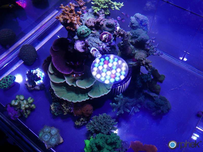 aquarium led lighting photos orphek. Black Bedroom Furniture Sets. Home Design Ideas
