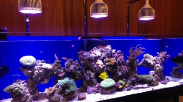 LED Aquarium Lighting -Orphek PR 72 reef