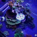 coral aquarium led light