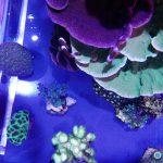 acuario coral llevó la luz del