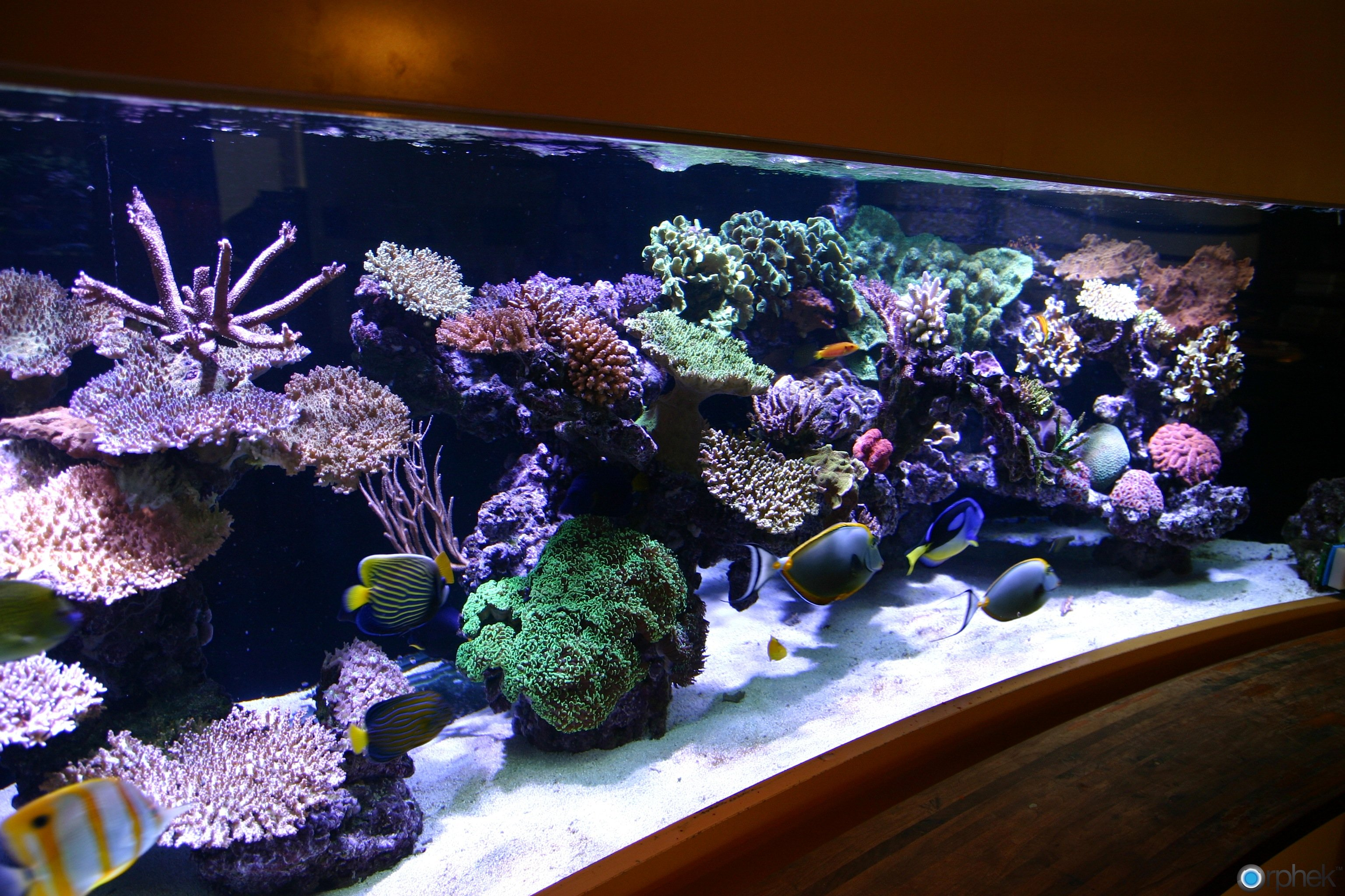 Beautiful marine aquariums on pinterest reef aquarium for Reef aquarium fish