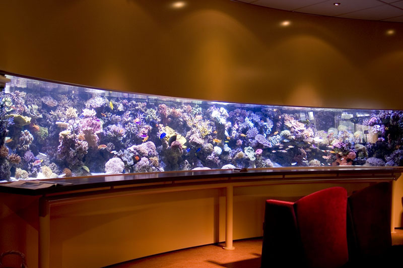Pieter van Suijlekom en Reef Aquarium Revisited