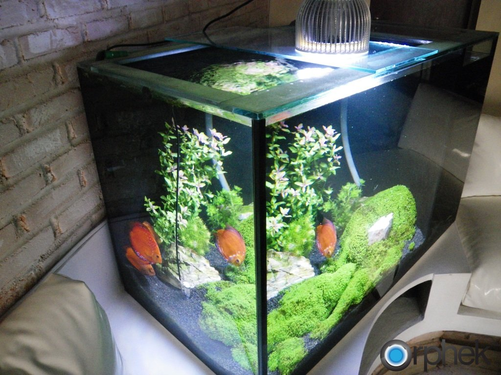 aquarium d'eau douce planté