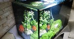 LED lighting for Planted aquarium
