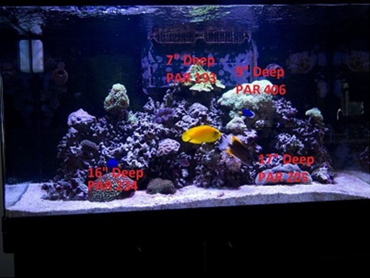 Test PAR PR72 w Reef Aquarium