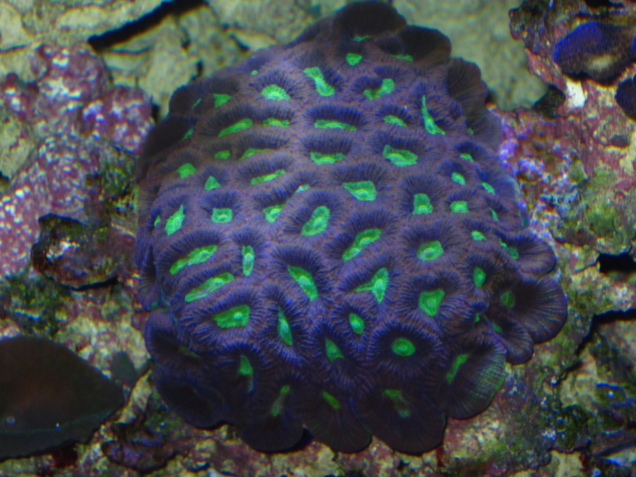 corals in deep aquarium under leds