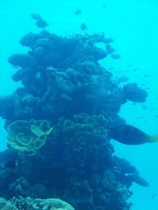 CORRECT SPECTRUM AND AMOUNT IS  NEEDED FOR GOOD CORAL GROWTH