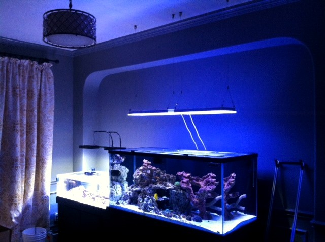 Carl M. Reef Aquarium Orphek Atlantik in Zeit Acclimation Modus KUNDEN FIRE BACK TO ORPHEK